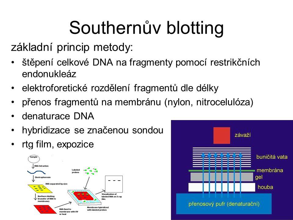 Southernův blotting základní princip metody: štěpení celkové DNA na fragmenty pomocí restrikčních endonukleáz elektroforetické rozdělení fragmentů dle