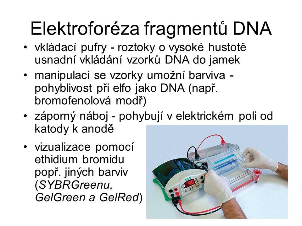 Elektroforéza fragmentů DNA vkládací pufry - roztoky o vysoké hustotě usnadní vkládání vzorků DNA do jamek manipulaci se vzorky umožní barviva - pohyb