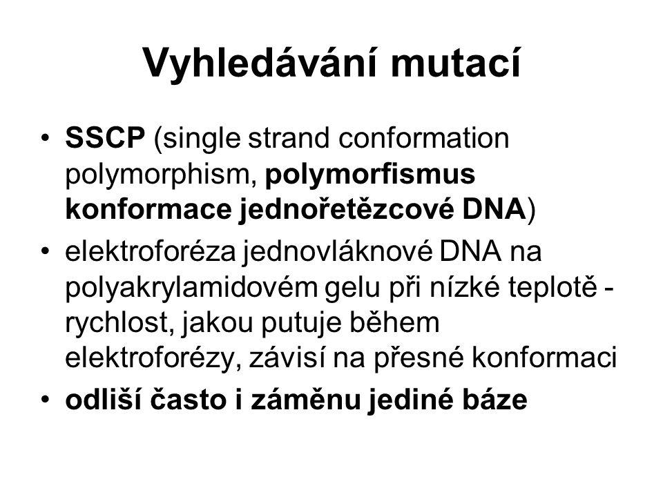 Vyhledávání mutací SSCP (single strand conformation polymorphism, polymorfismus konformace jednořetězcové DNA) elektroforéza jednovláknové DNA na poly