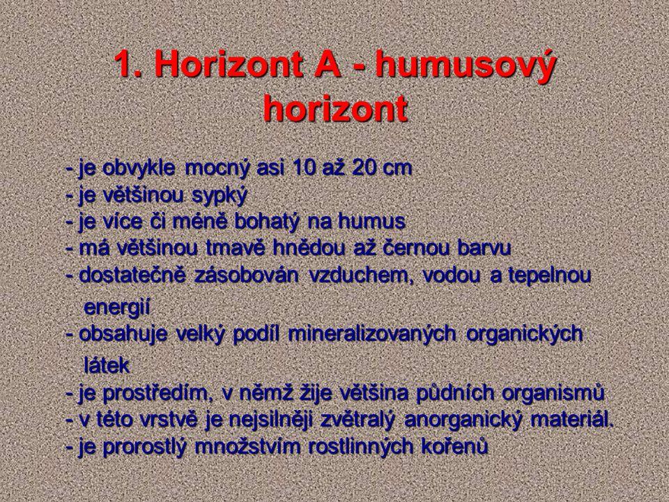 1. Horizont A - humusový horizont - je obvykle mocný asi 10 až 20 cm - je většinou sypký - je více či méně bohatý na humus - má většinou tmavě hnědou