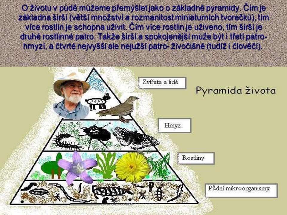 O životu v půdě můžeme přemýšlet jako o základně pyramidy. Čím je základna širší (větší množství a rozmanitost miniaturních tvorečků), tím více rostli