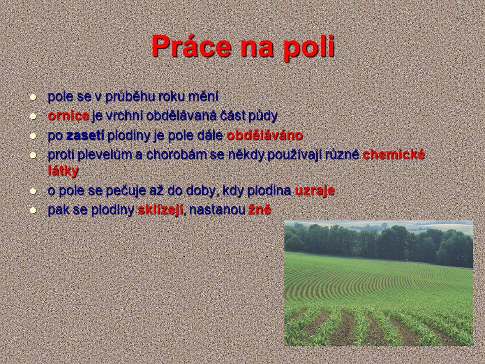 Práce na poli pole se v průběhu roku mění pole se v průběhu roku mění ornice je vrchní obdělávaná část půdy ornice je vrchní obdělávaná část půdy po z