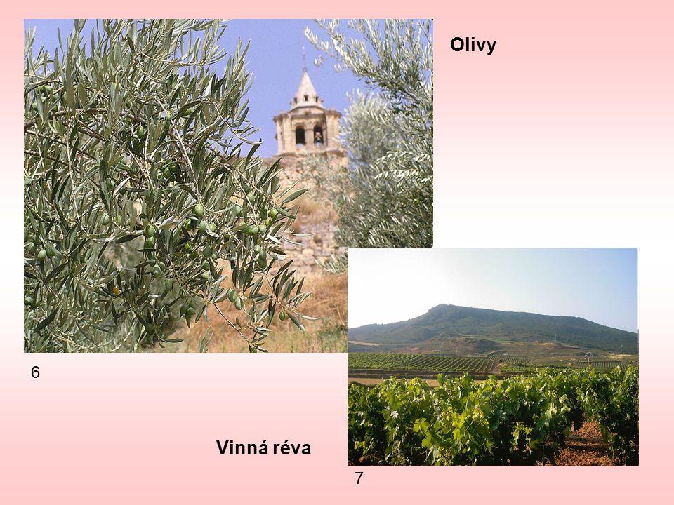 7 6 Olivy Vinná réva