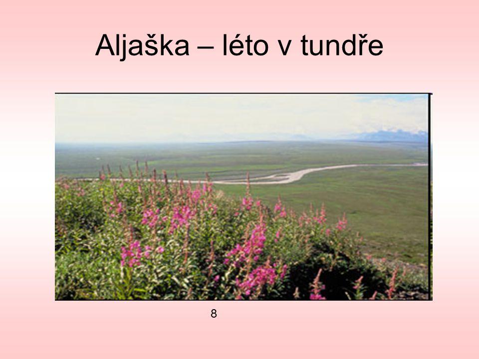 Aljaška – léto v tundře 8