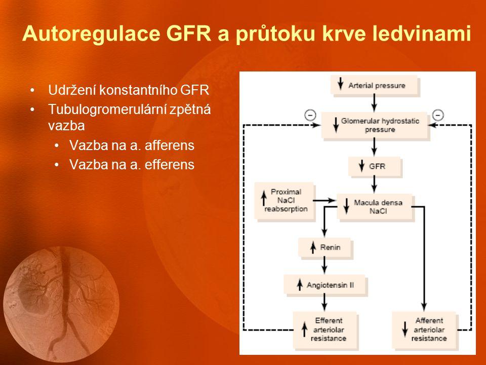 Nervová a hormonální regulace GFR Sympatický nervový systém Aktivace- GFR↓ RBF↓ Hormonální regulace