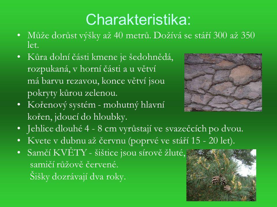 Charakteristika: Může dorůst výšky až 40 metrů.Dožívá se stáří 300 až 350 let.