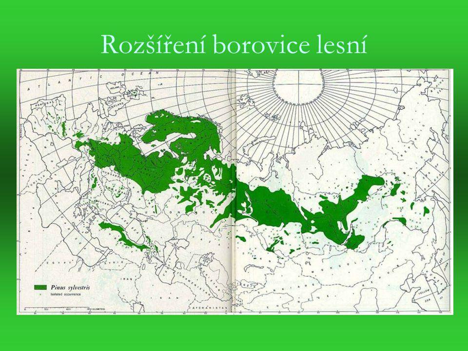 Rozšíření borovice lesní