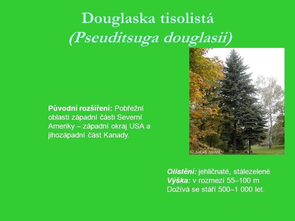 Douglaska tisolistá (Pseuditsuga douglasii) Olistění: jehličnaté, stálezelené Výška: v rozmezí 55–100 m Dožívá se stáří 500–1 000 let.