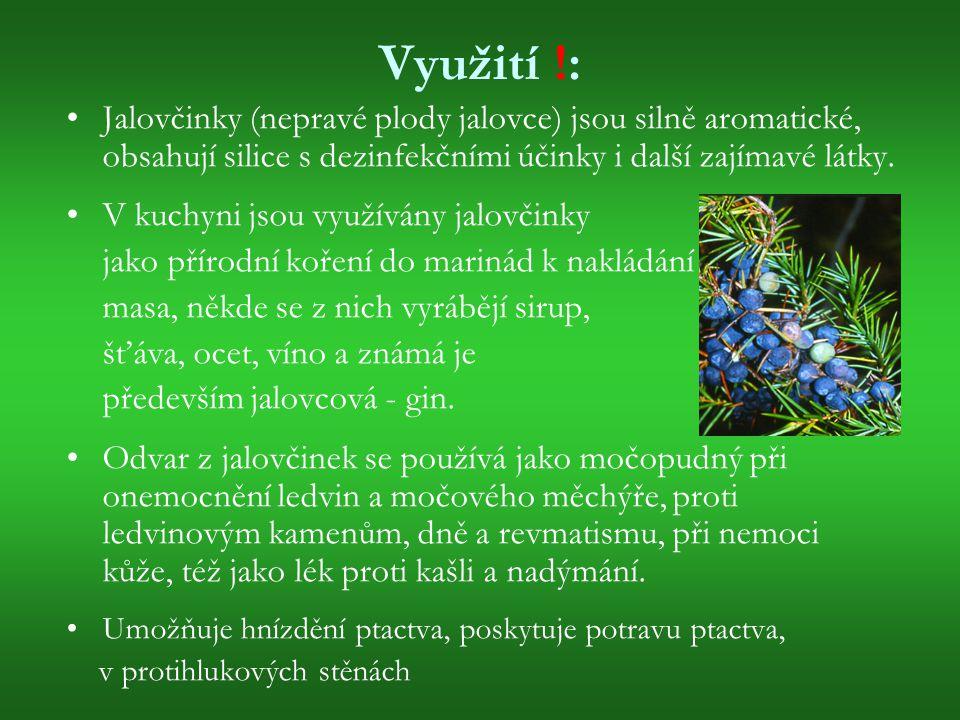 Využití !: Jalovčinky (nepravé plody jalovce) jsou silně aromatické, obsahují silice s dezinfekčními účinky i další zajímavé látky. V kuchyni jsou vyu