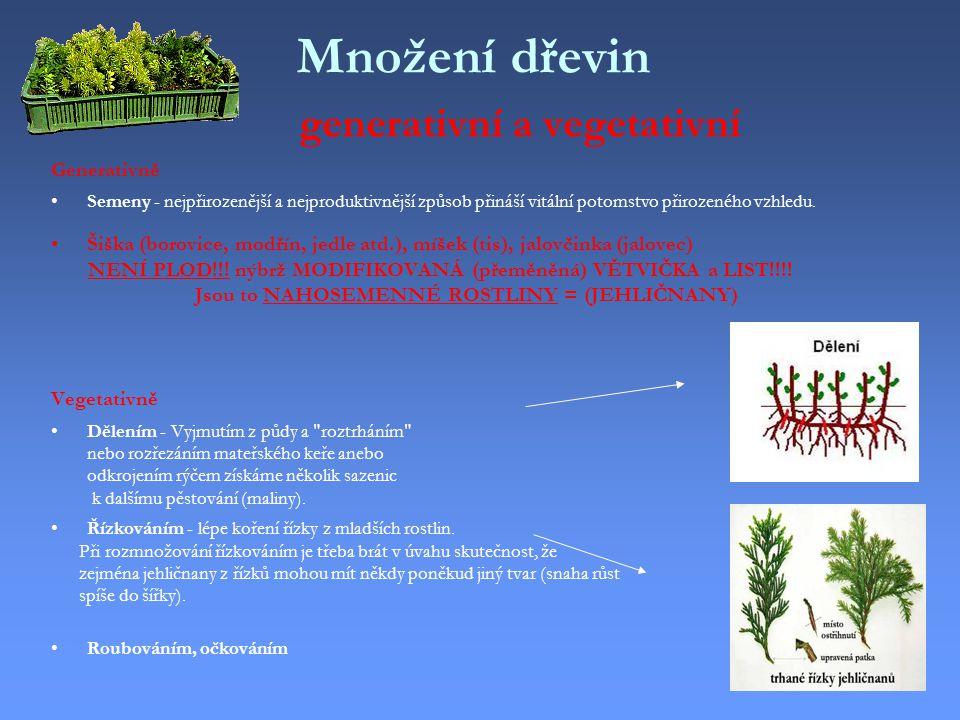 Množení dřevin generativní a vegetativní Generativně Semeny - nejpřirozenější a nejproduktivnější způsob přináší vitální potomstvo přirozeného vzhledu