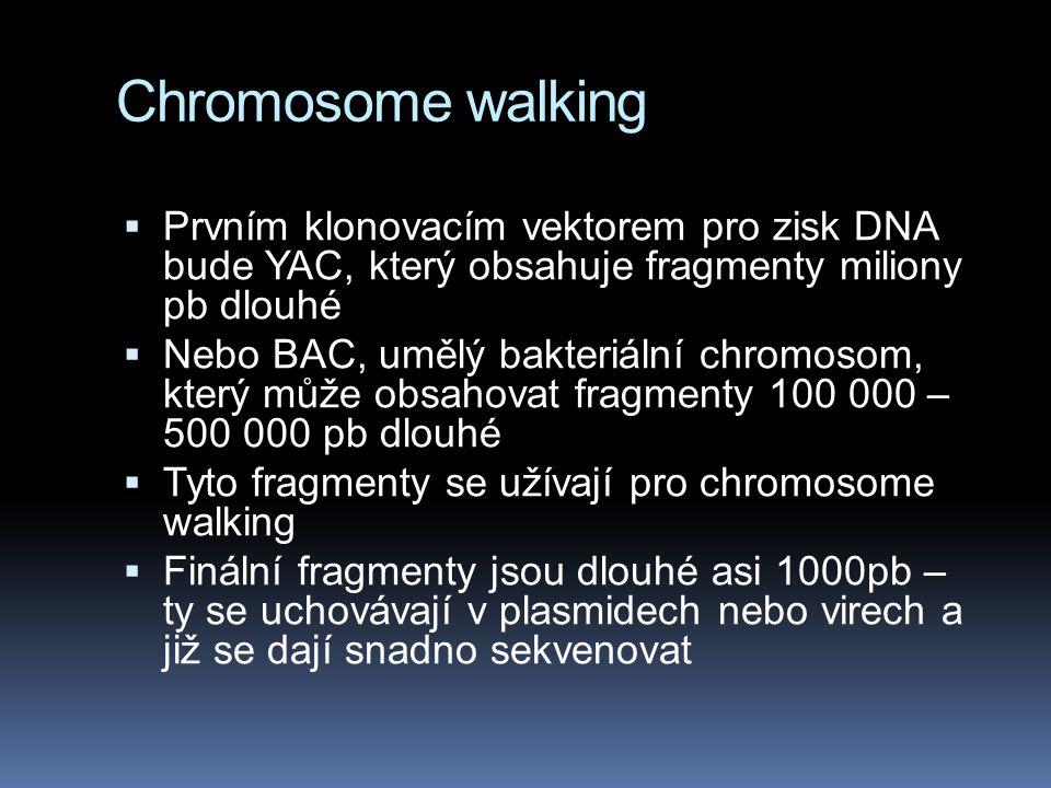 Chromosome walking  Prvním klonovacím vektorem pro zisk DNA bude YAC, který obsahuje fragmenty miliony pb dlouhé  Nebo BAC, umělý bakteriální chromosom, který může obsahovat fragmenty 100 000 – 500 000 pb dlouhé  Tyto fragmenty se užívají pro chromosome walking  Finální fragmenty jsou dlouhé asi 1000pb – ty se uchovávají v plasmidech nebo virech a již se dají snadno sekvenovat