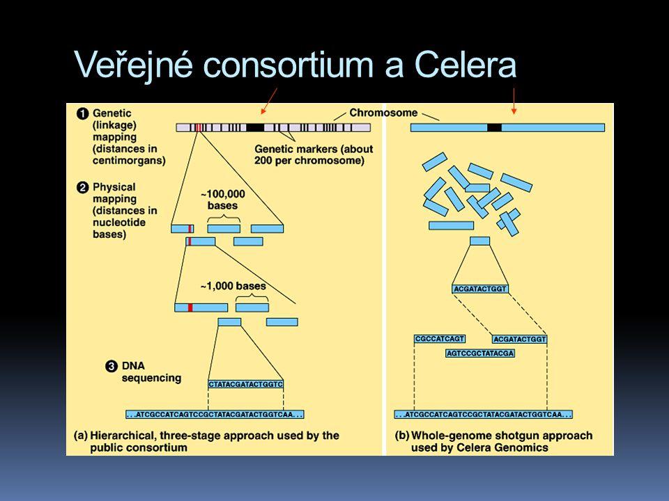 Veřejné consortium a Celera