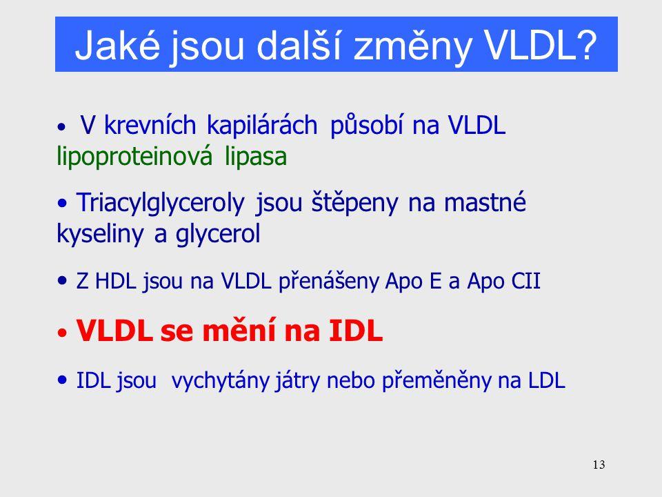 13 V krevních kapilárách působí na VLDL lipoproteinová lipasa Triacylglyceroly jsou štěpeny na mastné kyseliny a glycerol Z HDL jsou na VLDL přenášeny Apo E a Apo CII VLDL se mění na IDL IDL jsou vychytány játry nebo přeměněny na LDL Jaké jsou další změny VLDL ?