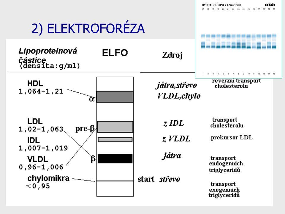 23 2) ELEKTROFORÉZA
