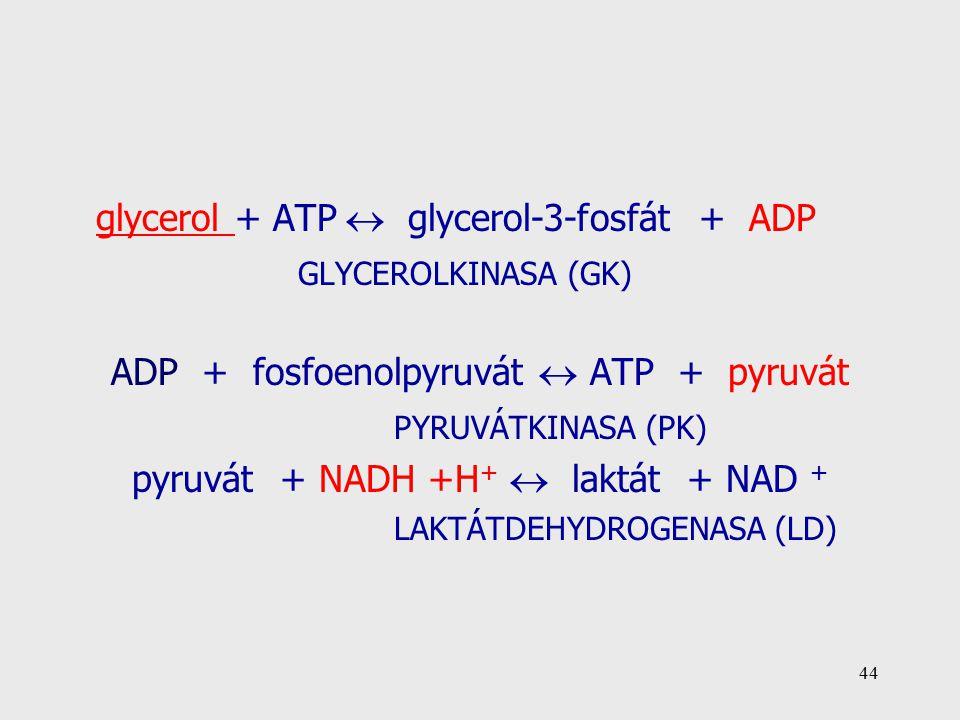 44 glycerol + ATP  glycerol-3-fosfát + ADP GLYCEROLKINASA (GK) ADP + fosfoenolpyruvát  ATP + pyruvát PYRUVÁTKINASA (PK) pyruvát + NADH +H +  laktát + NAD + LAKTÁTDEHYDROGENASA (LD)