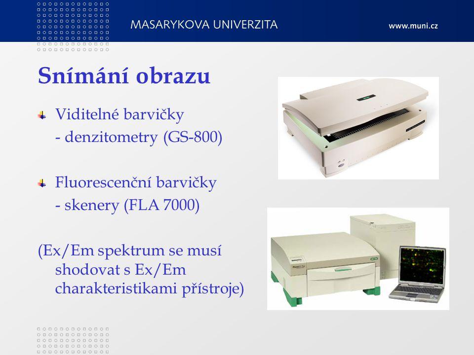 Snímání obrazu Viditelné barvičky - denzitometry (GS-800) Fluorescenční barvičky - skenery (FLA 7000) (Ex/Em spektrum se musí shodovat s Ex/Em charakteristikami přístroje)