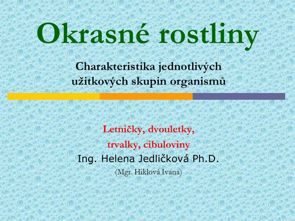 Okrasné rostliny Charakteristika jednotlivých užitkových skupin organismů Letničky, dvouletky, trvalky, cibuloviny Ing. Helena Jedličková Ph.D. (Mgr.