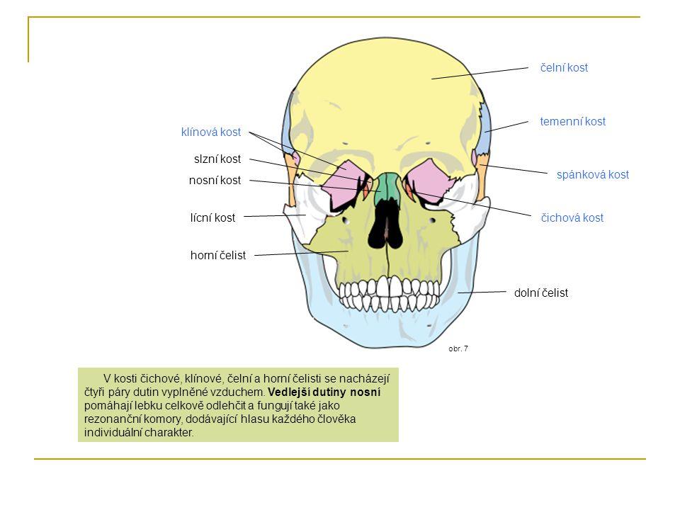 obr. 7 čelní kost temenní kost nosní kost klínová kost spánková kost lícní kostčichová kost horní čelist dolní čelist V kosti čichové, klínové, čelní