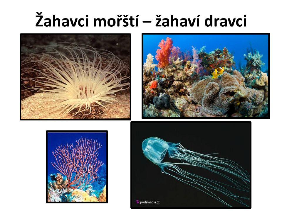 Koráli - žijí přisedle v koloniích - polypi (vápenaté kostry) - korálové útesy = ATOLY - korál červený - klenoty Video: https://www.youtube.com/watch?v=DXR6ZB8_Tqw