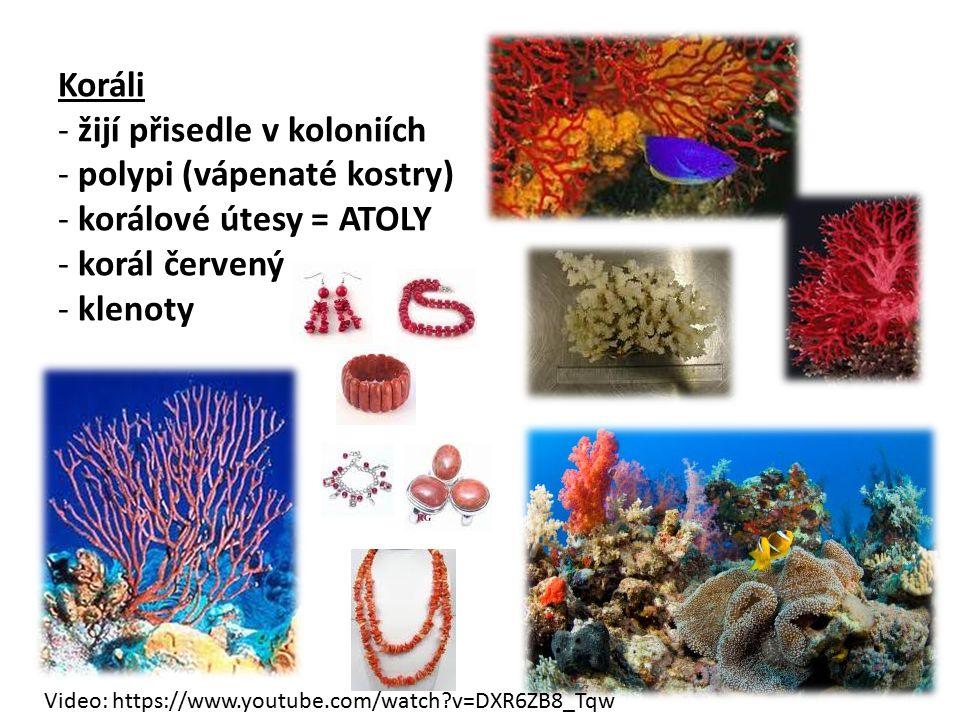 Koráli - žijí přisedle v koloniích - polypi (vápenaté kostry) - korálové útesy = ATOLY - korál červený - klenoty Video: https://www.youtube.com/watch?