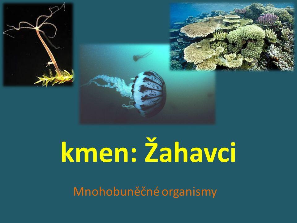 kmen: Žahavci Mnohobuněčné organismy