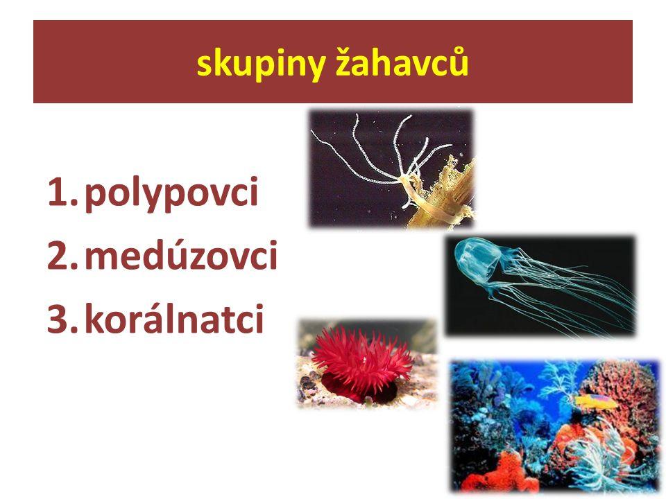 1.polypovci 2.medúzovci 3.korálnatci skupiny žahavců