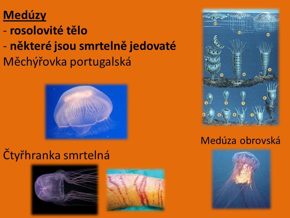 Medúzy - rosolovité tělo - některé jsou smrtelně jedovaté Měchýřovka portugalská Čtyřhranka smrtelná Medúza obrovská