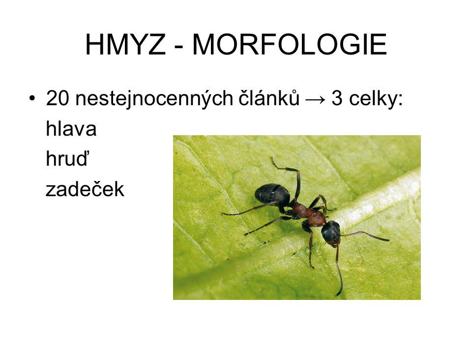 HMYZ - MORFOLOGIE 20 nestejnocenných článků → 3 celky: hlava hruď zadeček