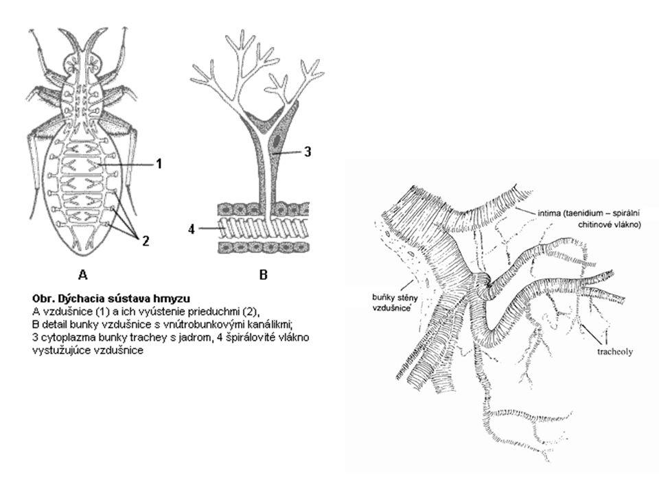 ústní ústrojí: kousací - kusadla (mandibuly) - čelisti (maxily) s makadly - spodní pysk s makadly