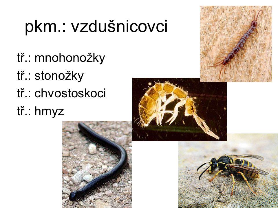 pkm.: vzdušnicovci tř.: mnohonožky tř.: stonožky tř.: chvostoskoci tř.: hmyz