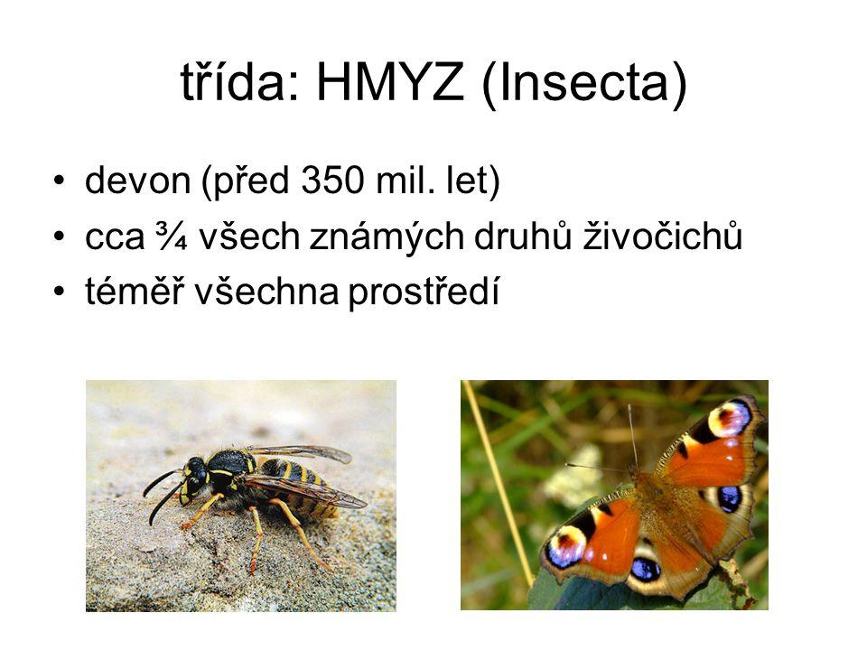 třída: HMYZ (Insecta) devon (před 350 mil. let) cca ¾ všech známých druhů živočichů téměř všechna prostředí