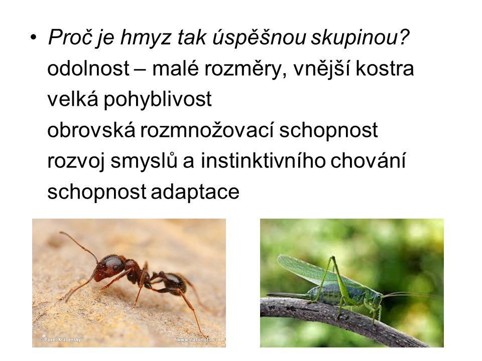 Proč je hmyz tak úspěšnou skupinou? odolnost – malé rozměry, vnější kostra velká pohyblivost obrovská rozmnožovací schopnost rozvoj smyslů a instinkti