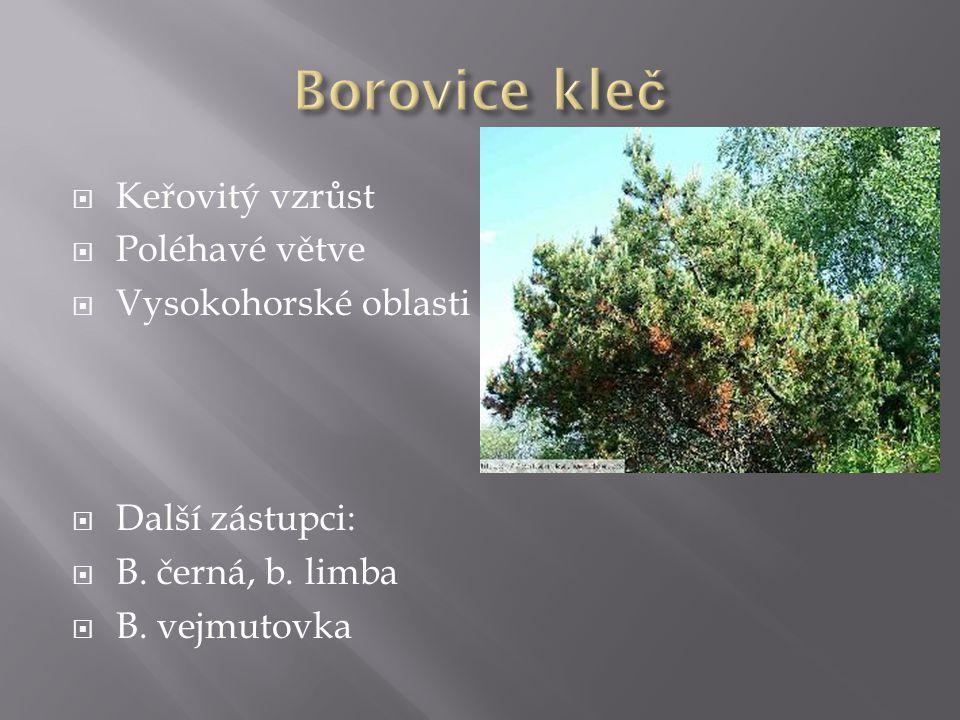  Keřovitý vzrůst  Poléhavé větve  Vysokohorské oblasti  Další zástupci:  B.