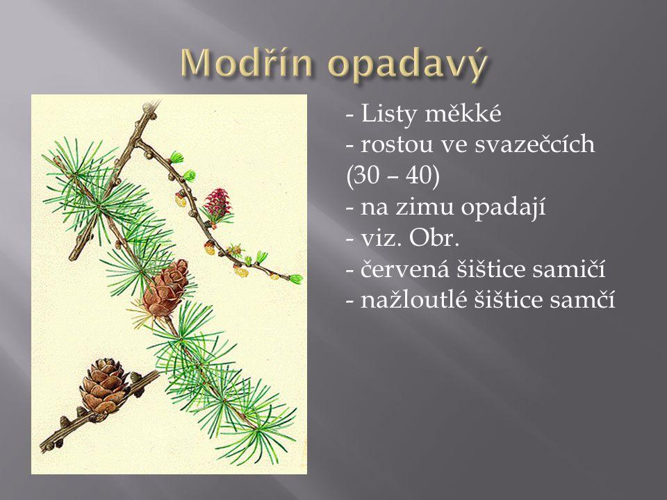 - Listy měkké - rostou ve svazečcích (30 – 40) - na zimu opadají - viz.