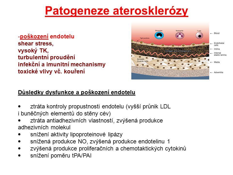 Endotel Hlavní funkce: * řízená permeabilita (vč.