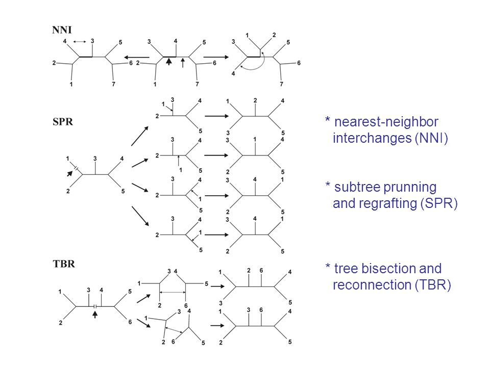 2.Heuristický přístup: a) stepwise addition b) star decomposition c) branch swapping* nearest-neighbor interchanges (NNI) * subtree prunning and regrafting (SPR) * tree bisection and reconnection (TBR)