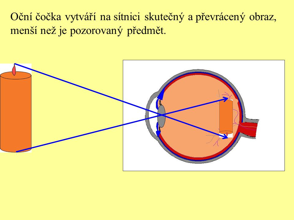 Normální oko mění zakřivení oční čočky podle vzdálenosti pozorovaných předmětů.