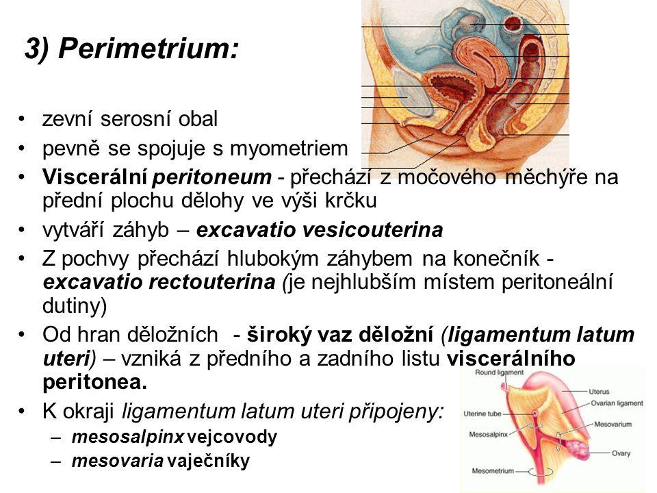 3) Perimetrium: zevní serosní obal pevně se spojuje s myometriem Viscerální peritoneum - přechází z močového měchýře na přední plochu dělohy ve výši krčku vytváří záhyb – excavatio vesicouterina Z pochvy přechází hlubokým záhybem na konečník - excavatio rectouterina (je nejhlubším místem peritoneální dutiny) Od hran děložních - široký vaz děložní (ligamentum latum uteri) – vzniká z předního a zadního listu viscerálního peritonea.