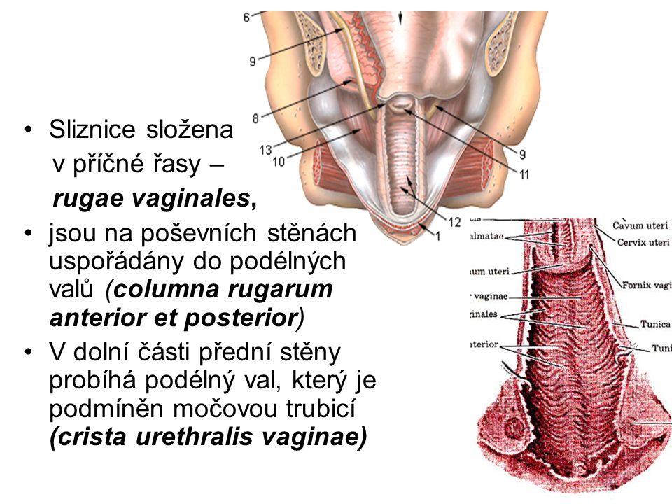 Sliznice složena v příčné řasy – rugae vaginales, jsou na poševních stěnách uspořádány do podélných valů (columna rugarum anterior et posterior) V dolní části přední stěny probíhá podélný val, který je podmíněn močovou trubicí (crista urethralis vaginae)
