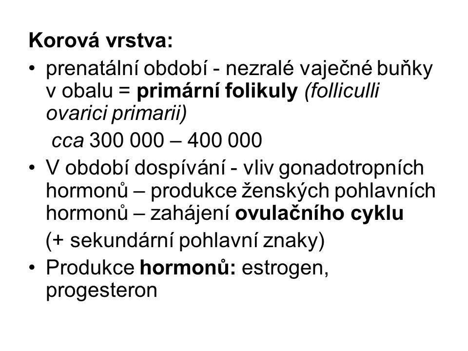 Korová vrstva: prenatální období - nezralé vaječné buňky v obalu = primární folikuly (folliculli ovarici primarii) cca 300 000 – 400 000 V období dospívání - vliv gonadotropních hormonů – produkce ženských pohlavních hormonů – zahájení ovulačního cyklu (+ sekundární pohlavní znaky) Produkce hormonů: estrogen, progesteron