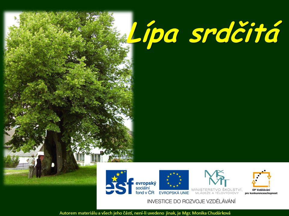 Dlouhověký strom ( 300 – 400 let) – pamětní strom. plody lípy