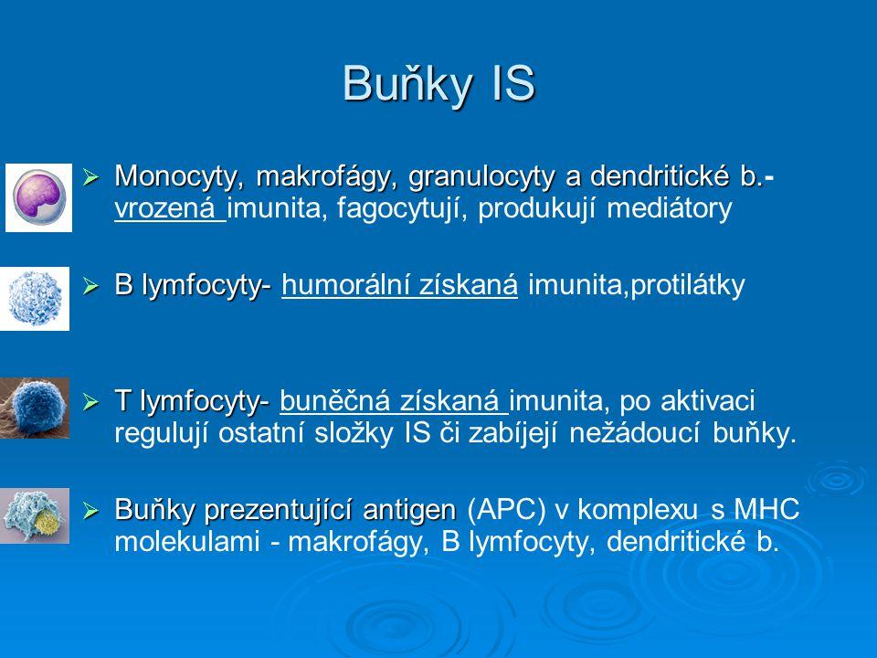 Buňky IS  Monocyty, makrofágy, granulocyty a dendritické b.  Monocyty, makrofágy, granulocyty a dendritické b.- vrozená imunita, fagocytují, produku