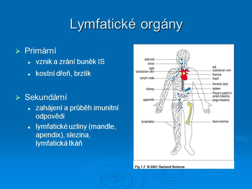Lymfatické orgány   Primární vznik a zrání buněk IS kostní dřeň, brzlík   Sekundární zahájení a průběh imunitní odpovědi lymfatické uzliny (mandle