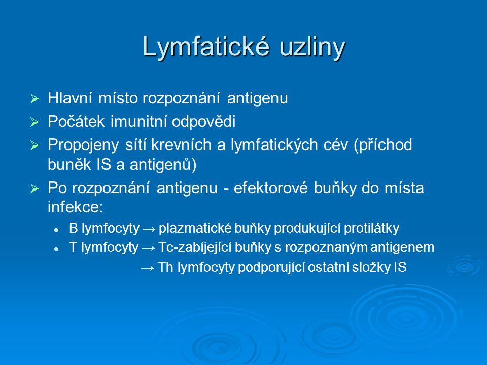 Lymfatické uzliny   Hlavní místo rozpoznání antigenu   Počátek imunitní odpovědi   Propojeny sítí krevních a lymfatických cév (příchod buněk IS