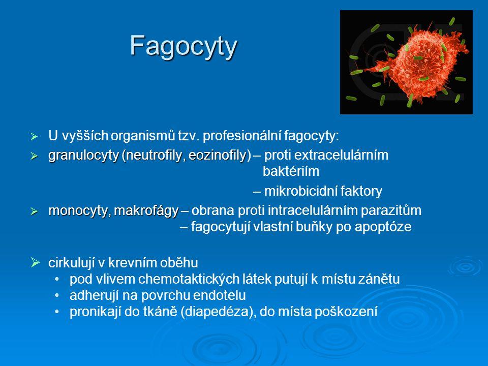 Fagocyty   U vyšších organismů tzv. profesionální fagocyty:  granulocyty (neutrofily, eozinofily  granulocyty (neutrofily, eozinofily) – proti ext