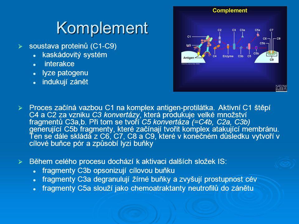 Komplement   soustava proteinů (C1-C9) kaskádovitý systém interakce lyze patogenu indukují zánět   Proces začíná vazbou C1 na komplex antigen-prot
