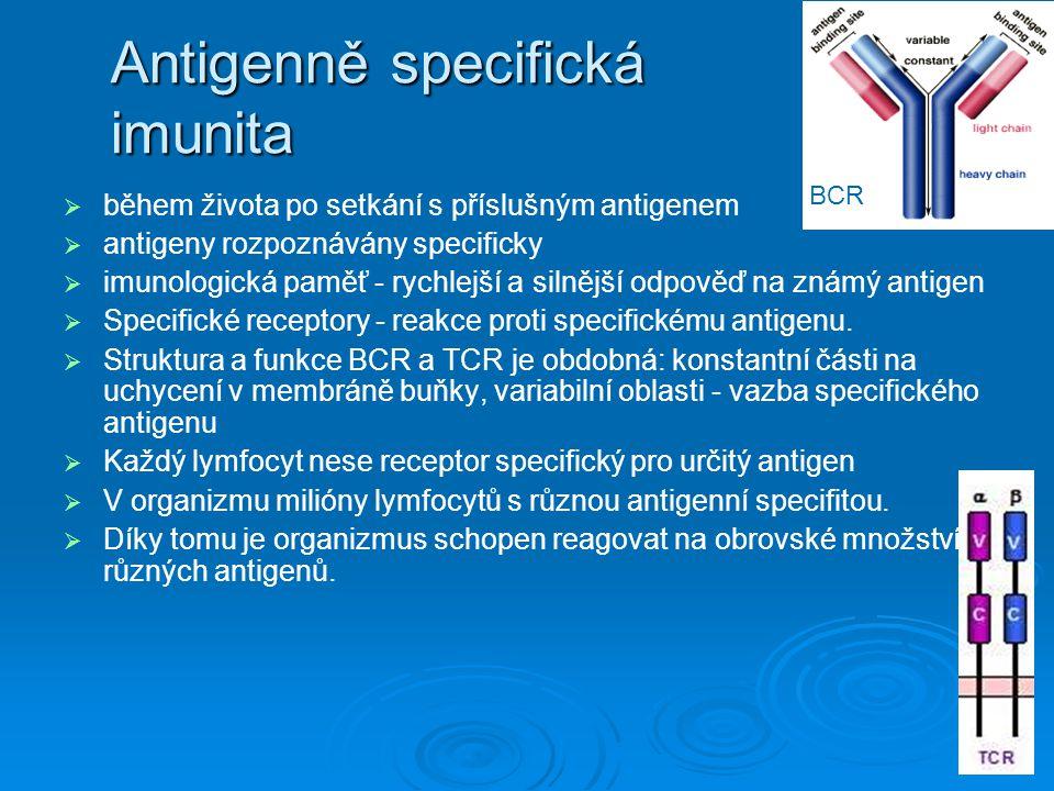 Antigenně specifická imunita   během života po setkání s příslušným antigenem   antigeny rozpoznávány specificky   imunologická paměť - rychlejš