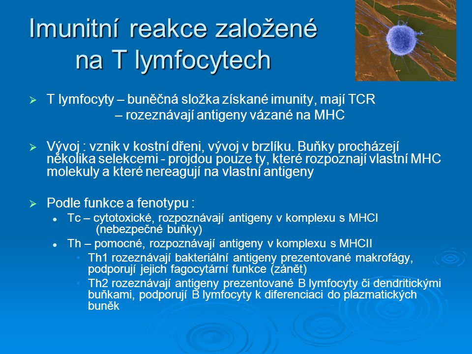 Imunitní reakce založené na T lymfocytech   T lymfocyty – buněčná složka získané imunity, mají TCR – rozeznávají antigeny vázané na MHC   Vývoj :