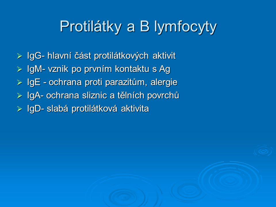 Protilátky a B lymfocyty  IgG- hlavní část protilátkových aktivit  IgM- vznik po prvním kontaktu s Ag  IgE - ochrana proti parazitům, alergie  IgA