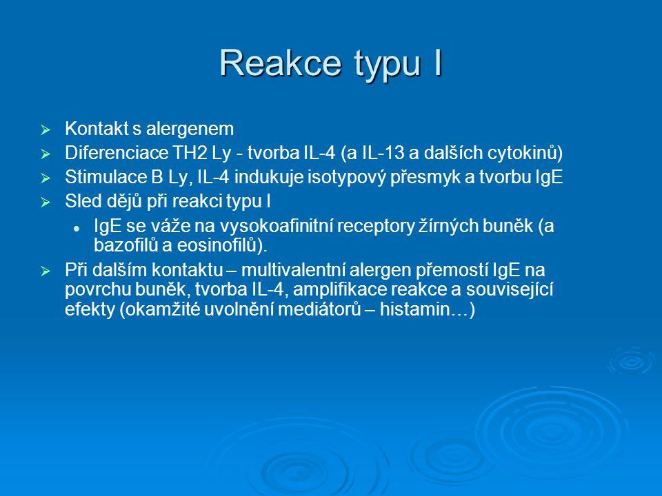 Reakce typu I   Kontakt s alergenem   Diferenciace TH2 Ly - tvorba IL-4 (a IL-13 a dalších cytokinů)   Stimulace B Ly, IL-4 indukuje isotypový p